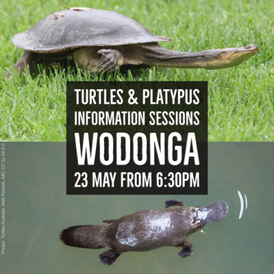 Turtle and Playpus information session invitation